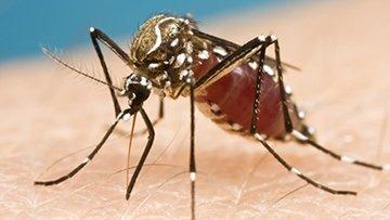 Zika Virus.