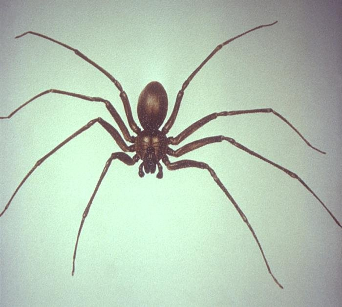 how to know if a spider is poisonous