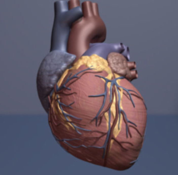How to turn damaged heart tissue back into healthy heart ... |Heart Scar Tissue