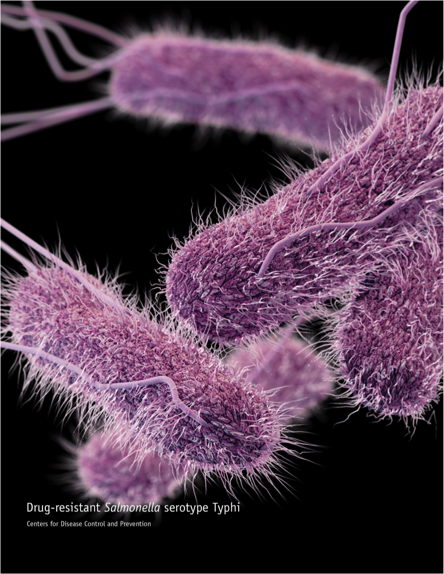 salmonella typhi typhoid fever Typhoid and paratyphoid fevers are systemic diseases caused by the bacteria salmonella typhi and salmonella paratyphi, respectively.