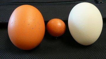 egg, chicken eggs, brown, white, chicken, farm, shell.jpg