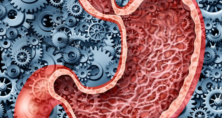 Human digestion function as a stomach anatomy of the human internal digestive organ represented by gears and cogs working to dig.