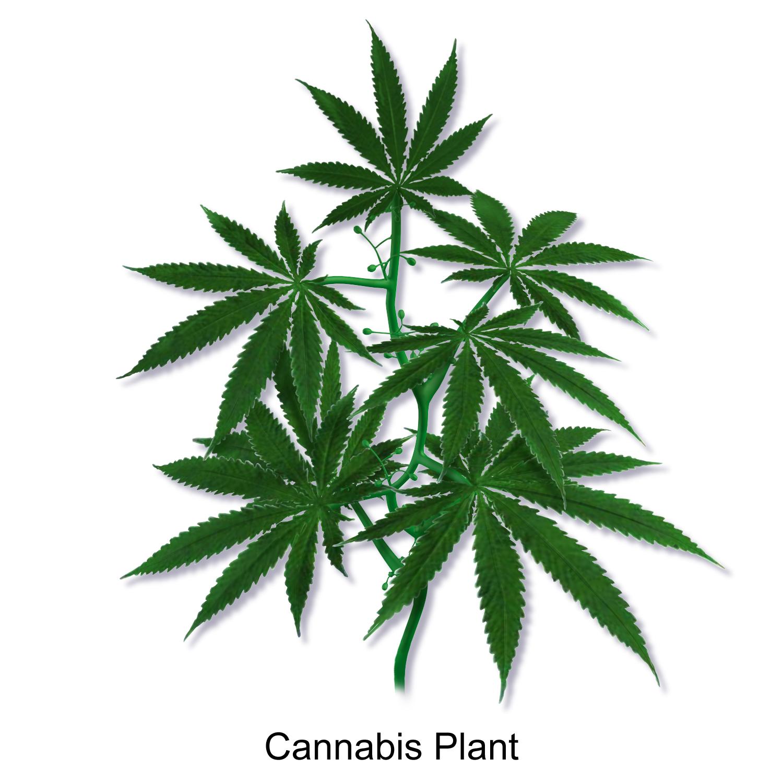 Free Weed Art Packaging Designs